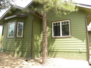 Exterior photo of a house with two white-trimmed windows, and a pine tree growing just feet away.